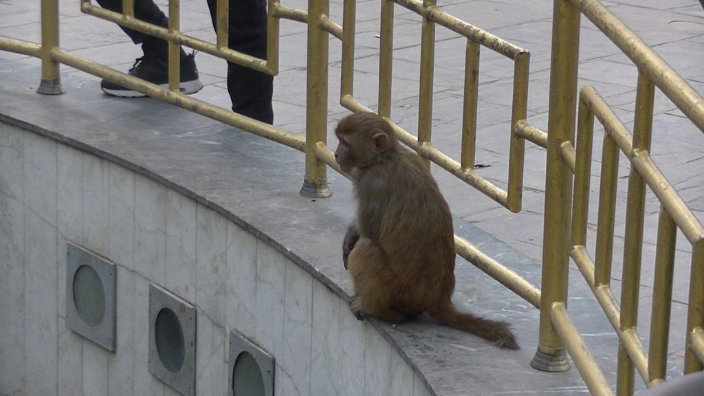 Monkey at the World Peace Pond - Highslide JS