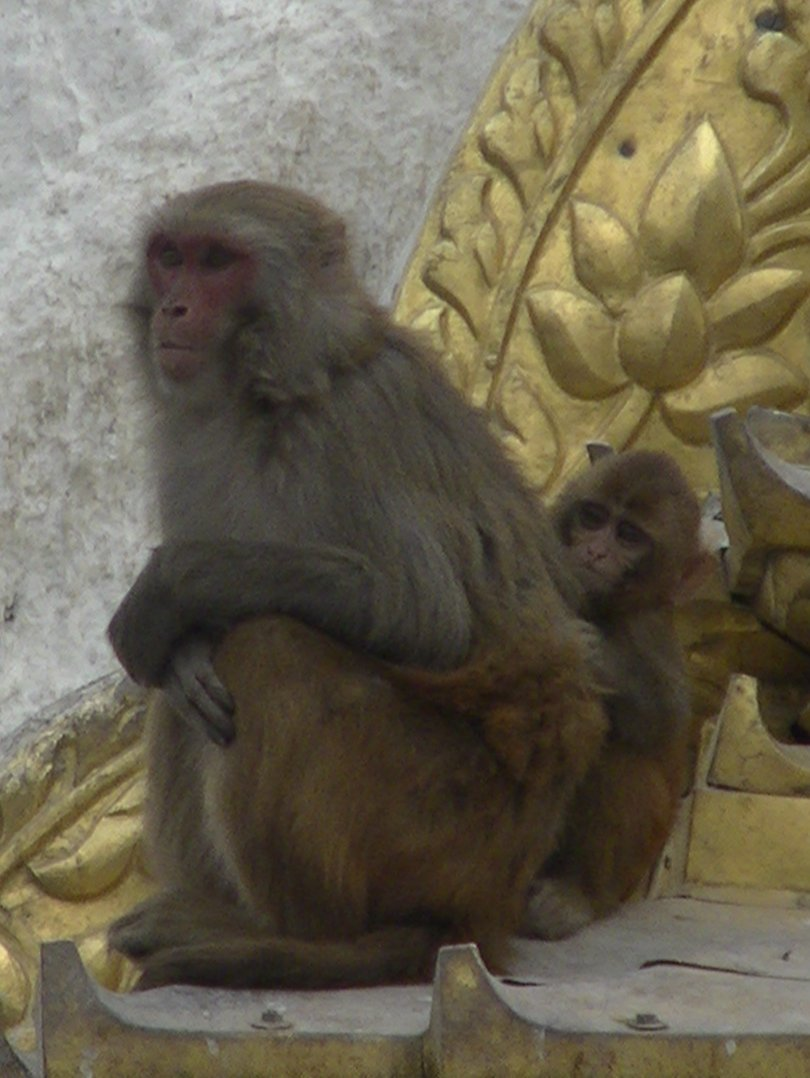 "Mutter und Kind am ""Affentempel"" / Swayambhunath - Highslide JS"